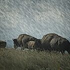 Family of Bison On the Range by Vickie Emms