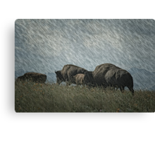 Family of Bison On the Range Canvas Print