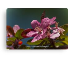 Pink Tree Blossom Canvas Print