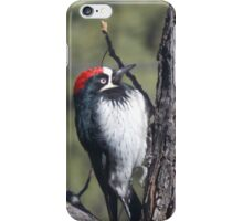 Red Capped Woodpecker  iPhone Case/Skin