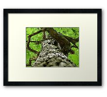 Taking Tree Climbing to the Next Level Framed Print