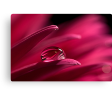 On A Gerbera Canvas Print