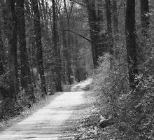 The road not taken by Samuel Schaar