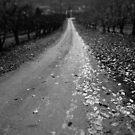 Roadway by Larry  Stewart