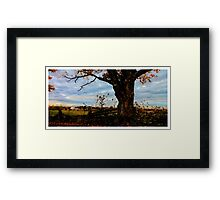 Old Tree at Scotsdale Farm - www.jbjon.com Framed Print