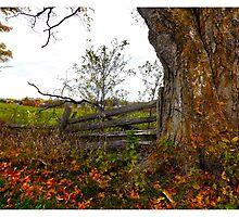 Old Tree becide wood fence - www.jbjon.com by Jonathan Baldock