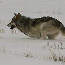 Winter Athlete by Ken McElroy
