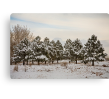Snowy Winter Pine Trees Canvas Print