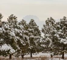Snowy Winter Pine Trees Sticker