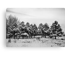 Snowy Winter Pine Trees In Black and White Canvas Print