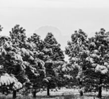 Snowy Winter Pine Trees In Black and White Sticker