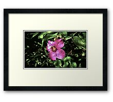 Wild Flower in the Forest - www.jbjon.com Framed Print