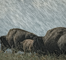 Family of Bison On the Range Sticker