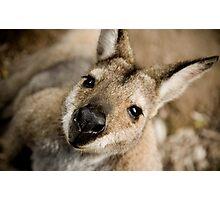 The Inquisitive Kangaroo Photographic Print