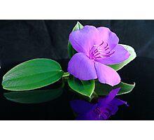 Flower Pink Photographic Print