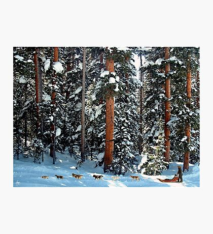 Dog Sled in the Douglas Fir Photographic Print