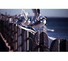 Battery Gulls, Charleston, SC Photographic Print