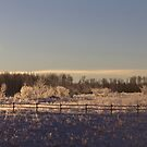 Frosty Fence by Kathi Arnell