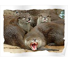 The Asian Small-clawed Otter ( Aonyx cinerea) Poster