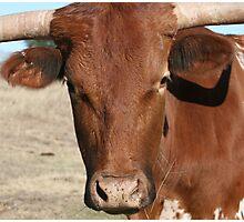 Bull! Photographic Print