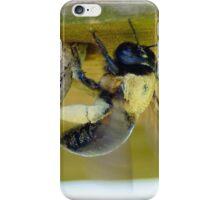 Carpenter Bee iPhone Case/Skin