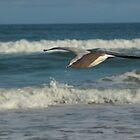 Ormond Beach Gull by Margaret  Shark