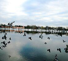 Bird flock by Sandyou
