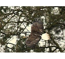 Eagle Photo Of The Day 2 Photographic Print