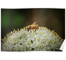 Covered in Pollen Poster