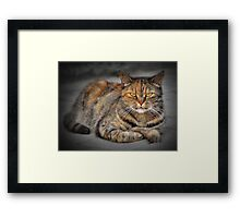 Rest in the last rays of the sun Framed Print