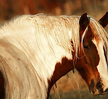 Paint Horse Near Spanish Fork by Ryan Houston