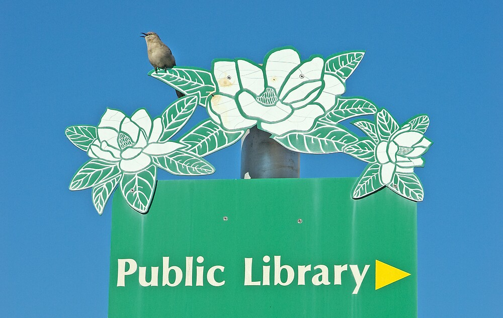 Northern Mockingbird Singing Near the Tallahassee Library by pjwuebker