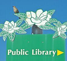 Northern Mockingbird Singing Near the Tallahassee Library by pjwuebker
