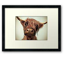 Hairy Coo Framed Print