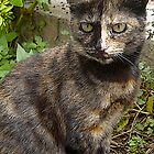 Bisected face feline by nikib