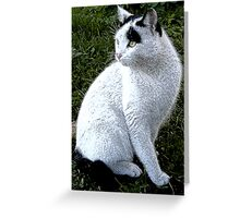A white cat with black marks Greeting Card