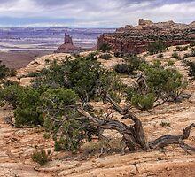 Canyonlands, Utah by CarolM