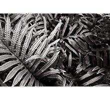 Platinum leaf Photographic Print