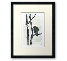 Hawk - www.jbjon.com Framed Print