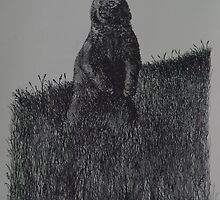 Alaskan Grizzly Bear - www.jbjon.com by Jonathan Baldock