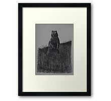 Alaskan Grizzly Bear - www.jbjon.com Framed Print
