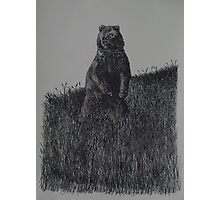 Alaskan Grizzly Bear - www.jbjon.com Photographic Print