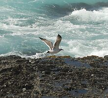 Fort Bragg gull and shore by Lenny La Rue, IPA
