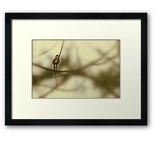Singing his heart out . . . Framed Print