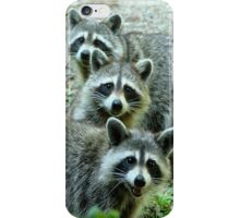 Three Raccoon iPhone Case/Skin