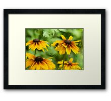 Bee on Black Eyed Susan Framed Print