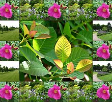 Hyde Hall Collage Featuring Wild Rose and Irises by kathrynsgallery