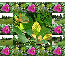 Hyde Hall Collage Featuring Wild Rose and Irises Photographic Print