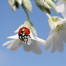 Ladybird. by Ellen van Deelen