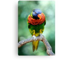 Rainbow Lorikeet II Canvas Print